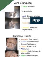 Anatomia Apostila