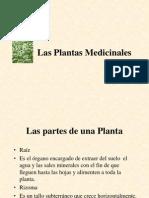 15242434 Las Plantas Medicinales