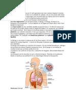 El Aparato Circulatorio 2.doc