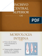 Incisivo Central Superior Endo