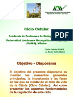 14 Ciclo Celular R Ortiz