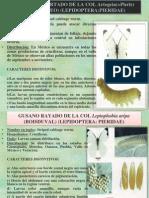Presentacion de Entomologia