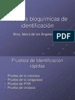 Identifacion de Pruebas Bioquimicas