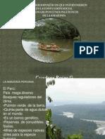 Amazonia 2020