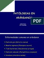 08-_Dr._Andrés_Frances_FINAL9[1]