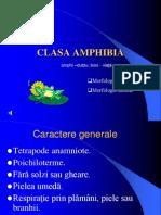 Clasa Amphibia