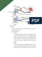 Anatomi Fisiologi saraf