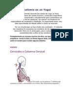 Anatomía en un Yogui