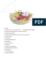 TP 1 Fisiologia Correccion