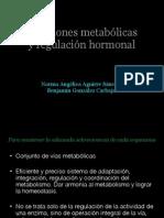 12. Relaciones metabolicas