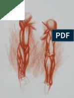 Anatomy Study