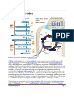 Cellular respiration.pdf