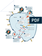 Digrams of HIV