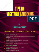 Tips on Vegetable Gardening