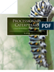 Processionary Caterpillars