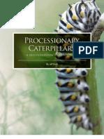 Processionary Caterpillars