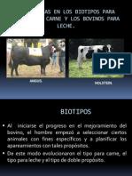 Biotipos Bovinos