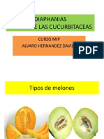 MIP MELON_DIAPHANIA.pdf
