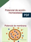 Clase 8. Potencial de acción- Homeostasia