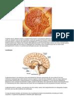 Glândula Pineal - Ativação