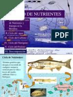 Ciclo de Nutrientes (1)