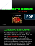 Acinetobacter baumannii infections update