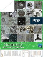 Microfossil Poster