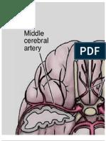 Cerebral Arteries Poster