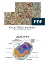 Clase celulas nerviosas.pdf