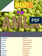 Amla Cultivation -Eswar