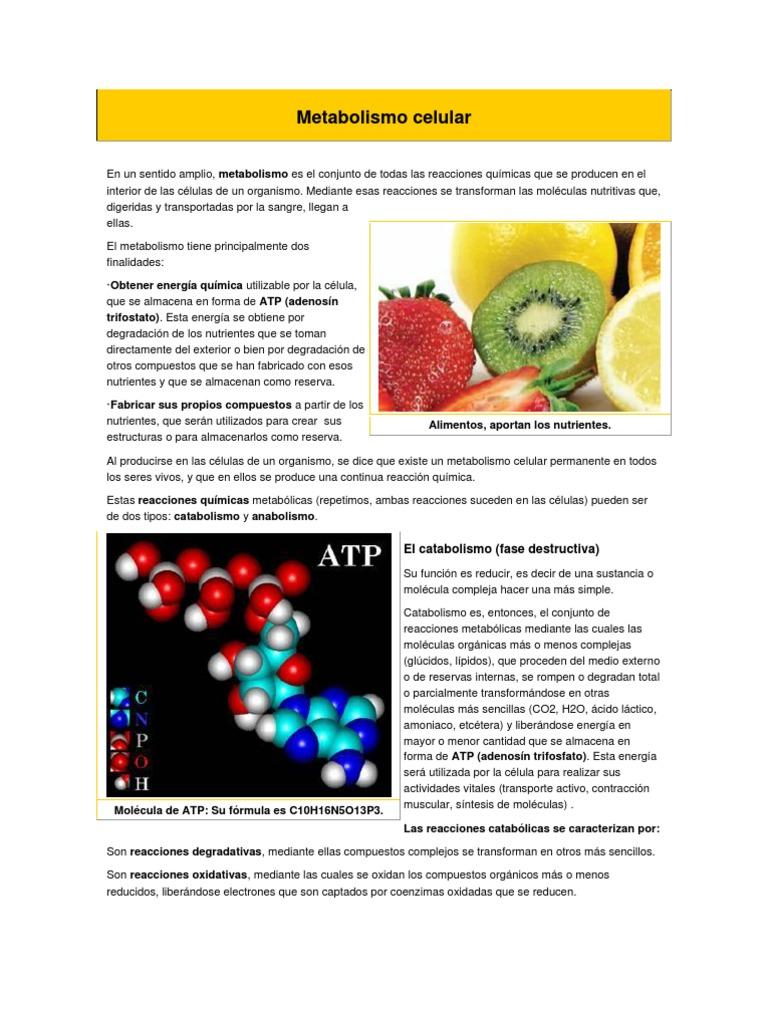 Qué puede insagmar la educación sobre Metabolismo basale