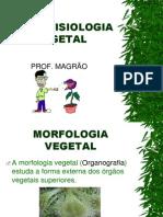 Anatofisiologia Vegetal