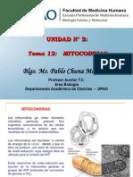 20.  Mitocondrias