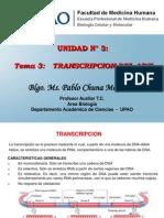 24.  Transcripción