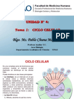 26. Ciclo Celular