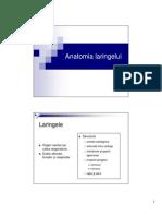 Anatomia Laringelui 2013