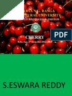 Cherry Presentation Sereddy