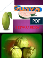 Guava Cultivation Practices-sereddy