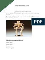 Generalidades de osteología y sindesmología huesos y músculos de la cabeza y cuello