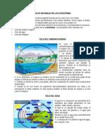 Ciclos Naturales de Los Ecosistemas
