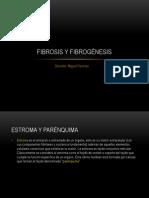 Fibrogénesis