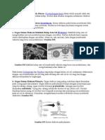 Organ Sistem Ekskresi Pada Hewan