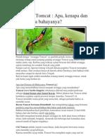 Serangga Tomcat dan pencegahan