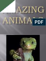 Animaux [024] Amazing Animals (6)