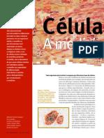 células-tronco bioengenharia