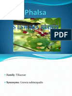Phalsa-seed to Fruit