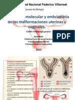 Explicación molecular y embrionaria de las malformaciones uterinas y vaginales...
