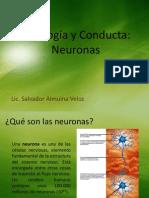 Fisiologa y Conducta Neuronas599