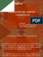 Fragmentación del Hábitat y efecto de borde