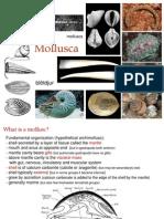 Molluscs 02